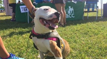 Seeking Sponsors for 6th Annual Walk Run Wag for MADACC
